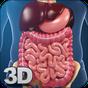 Digestive System Anatomy 1.2