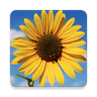 Photo Gallery 1.0 APK
