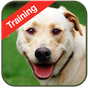 Dog Training 1.2