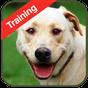 Dog Training 1.2