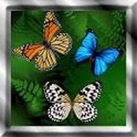 Butterfly Live Wallpaper Simgesi
