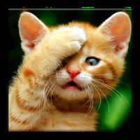 Ícone do Papéis de parede do gato