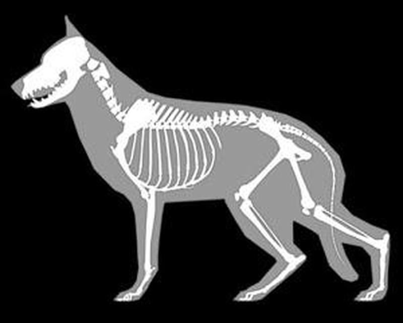 Fine 3d Canine Anatomy Embellishment - Human Anatomy Images ...