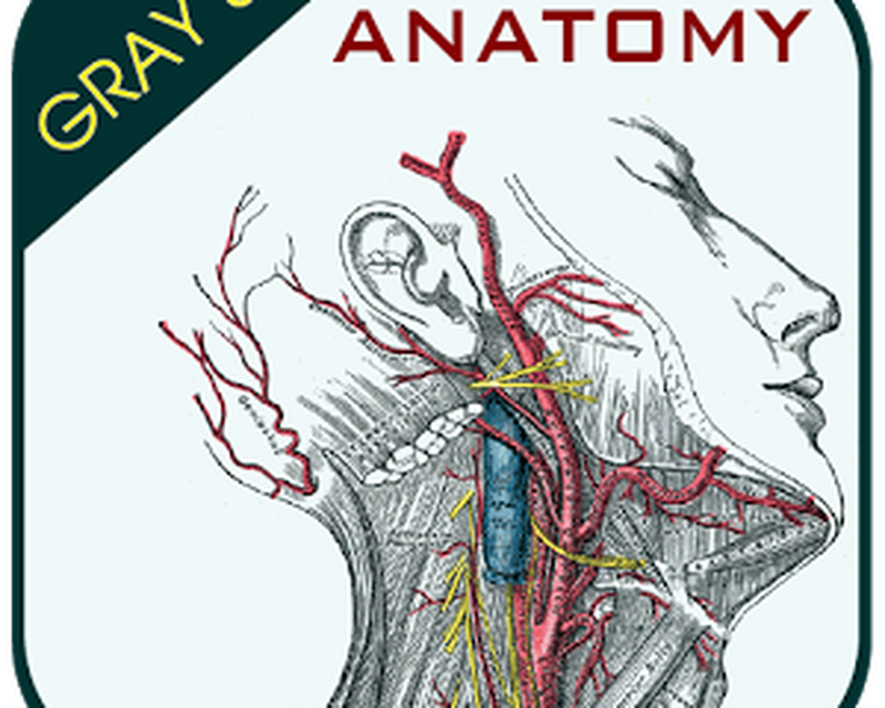 Outstanding Grays Anatomy Atlas Picture Collection - Human Anatomy ...