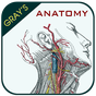 Gray's Anatomy - Atlas 3.8