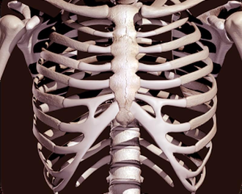 Bones Human 3d Anatomy Android Free Download Bones Human