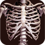 Ossa umano 3D (anatomia) 2.0.20