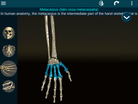 Ossa umano 3D (anatomia) 2 0 20 download gratis - Android