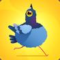 Pigeon Pop 1.1.3