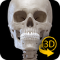Skeleton | 3D Anatomy 2.3.2