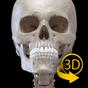 Scheletro | Anatomia 3D 2.3.2