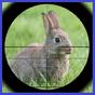 Tavşan Avı