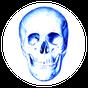 Anatomi Testi 3.7.1