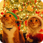 Christmas Cat Live Wallpaper 1.0.5