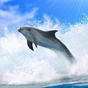 Dolphins 3D. Live Wallpaper. 7.0
