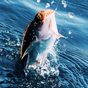 Real Fishing Pro 3D 1.3.9