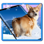 3D Rump Shaking Corgi Dog Theme&Live wallpaper 1.1.5