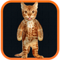 Real Talking Cat  APK