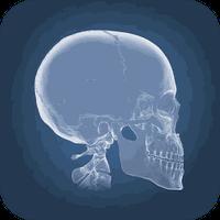 Anatomy 4D Simgesi