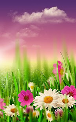 Scarica Lapk Di Prato Primavera Sfondi Animati 30 Gratuitamente