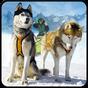 Nieve Trineo con perros 3D  APK