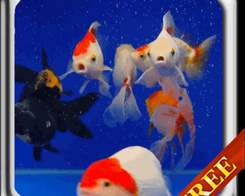Unduh 77 Wallpaper Animasi Ikan Hidup HD Terbaik