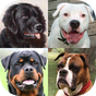 Dogs Quiz - Guess Popular Dog Breeds on the Photos 1.0