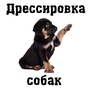Дрессировка собак 8.0