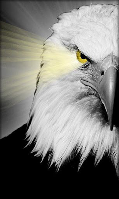 Eagle Live Wallpaper Image 2