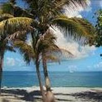 Beach Trees Live Wallpaper APK Simgesi