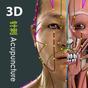 Visual Acupuncture 3D 2.8