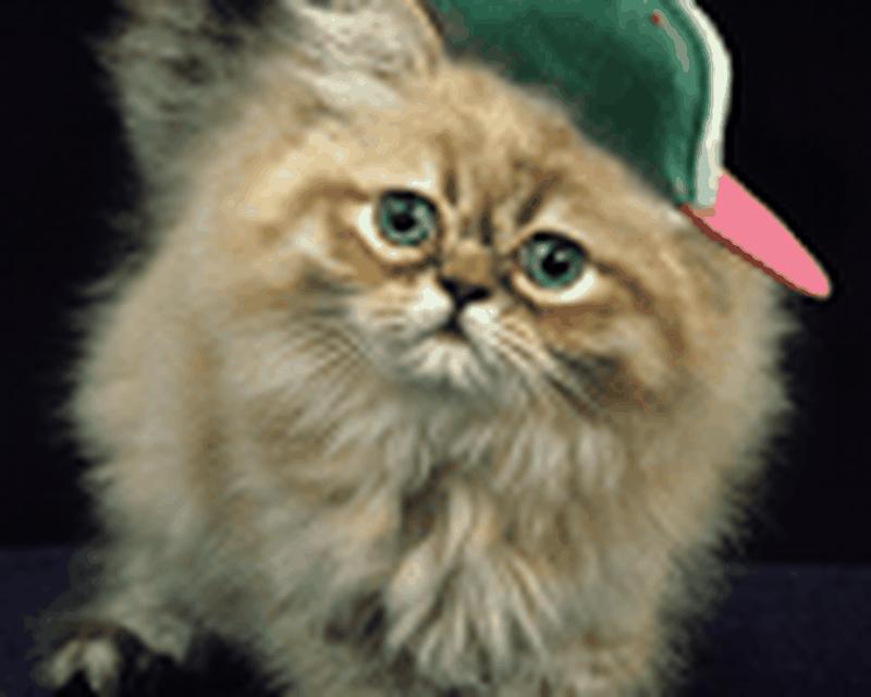 Ginger Cat Cute Wallpaper