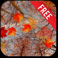 Ikona Autumn Maple Live Wallpaper