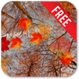 Autumn Maple Live Wallpaper 7.2.2