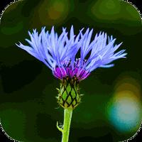 Icône de Blur Image - DSLR focus effect