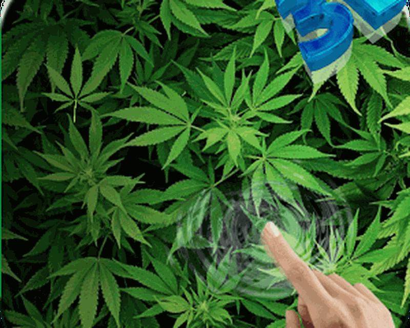 Обои конопли для андроид выращиваем семечко марихуаны