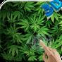Marijuana 3D Live Wallpaper HD 1.0 APK
