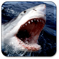 Shark Live Wallpaper Android
