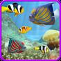 Aquarium and fishes 1.7.1