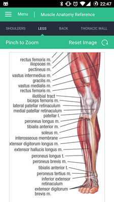Muscle Anatomy Reference Guide Android - Free Download