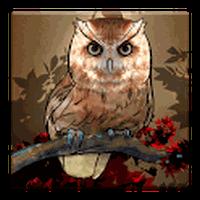 Icône apk Owl Wallpaper