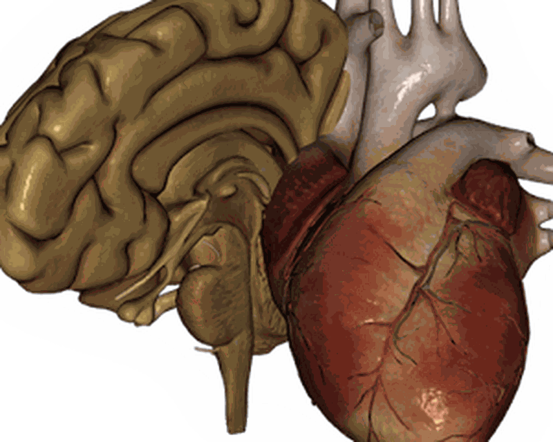 Órganos 3D (anatomía) 2.0.9 Android - Descargar gratis