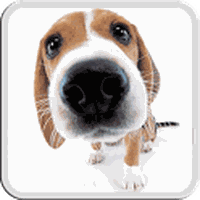 DOG LICKS SCREEN LWP FREE Simgesi
