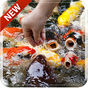 Koi Free 3D Live Wallpaper 1.0