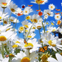 Flor Gratis Live Wallpaper