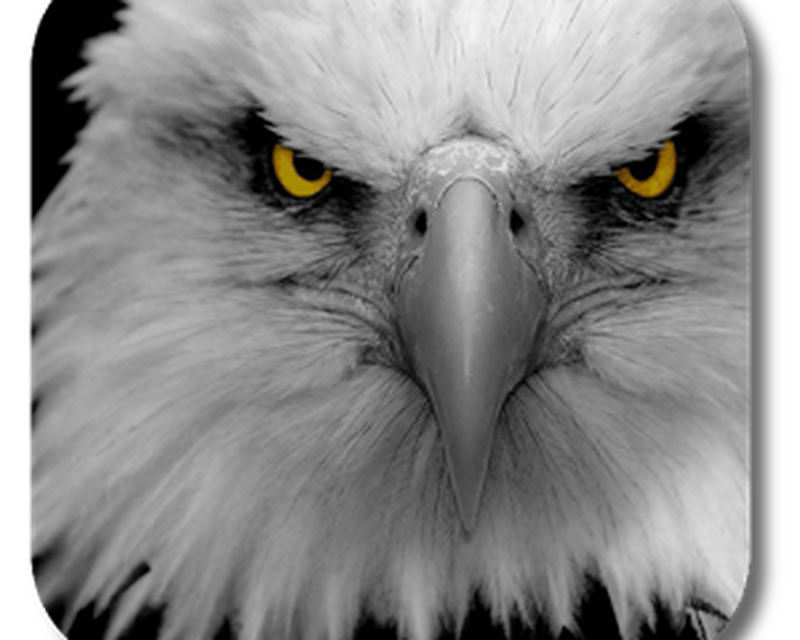 Eagle Live Wallpaper Android