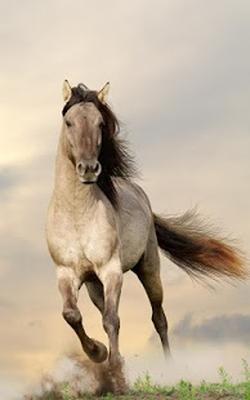 Cavalli Sfondi Animati 200 Download Gratis Android