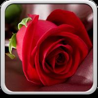 Rose Live Wallpaper Android Free Download Rose Live Wallpaper App