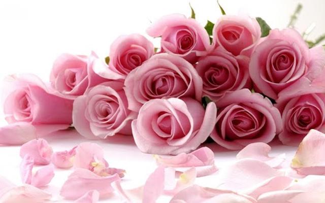 Rosa Sfondi Animati 200 Download Gratis Android