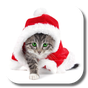 Christmas Cat Live Wallpaper 2.5